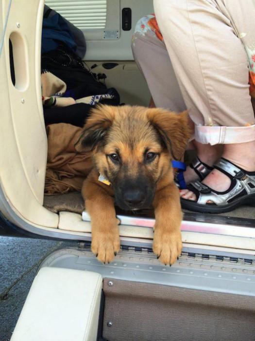 Perro rescatado por la organización alas de rescate a la puerta de un avión