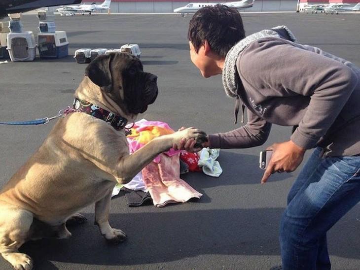 Perro sostenido de la mano de un voluntario de la organización alas de rescate
