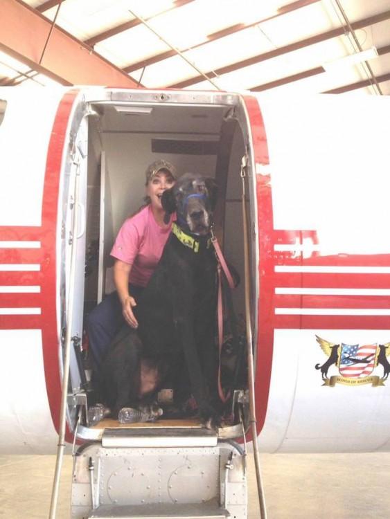 Voluntaria de la organización alas de rescate dentro de un avión con un perro muy grande