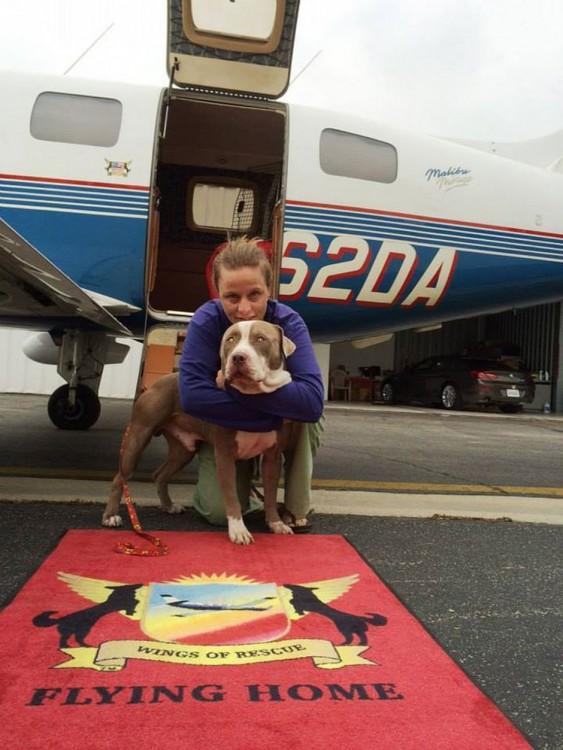 Voluntaria de la organización alas de rescate abrazando a un perro rescatado