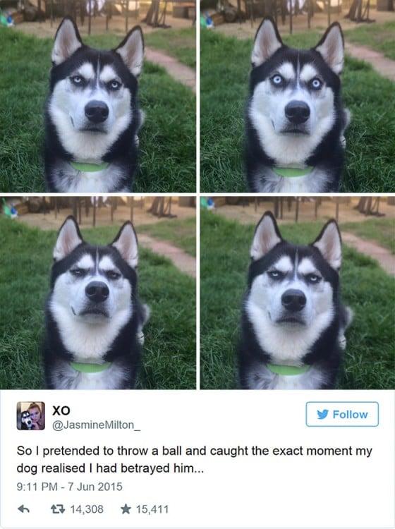 Anuko, el perro que no se deja engañar