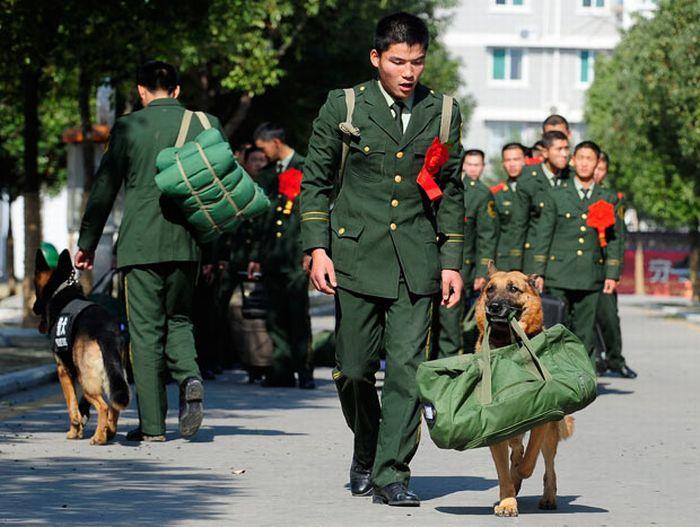 Entrenamiento en China de perros