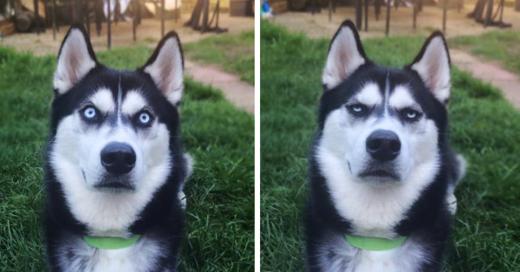 pretendio lanzarle una pelota a su perro