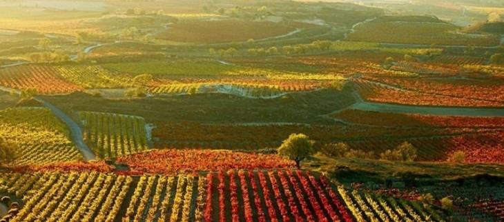 viñedos chilenos en peligro de extiincion por cambio climatico