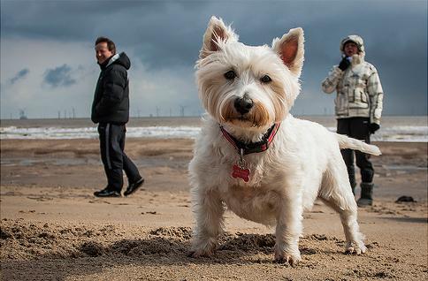 perrito posando parala camara en un paseo por la playa