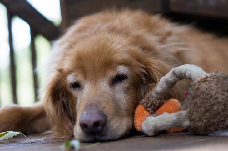 perrito dormido junto a su muñeco