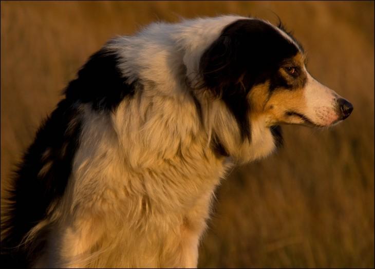 perro con cara de regañado enojado