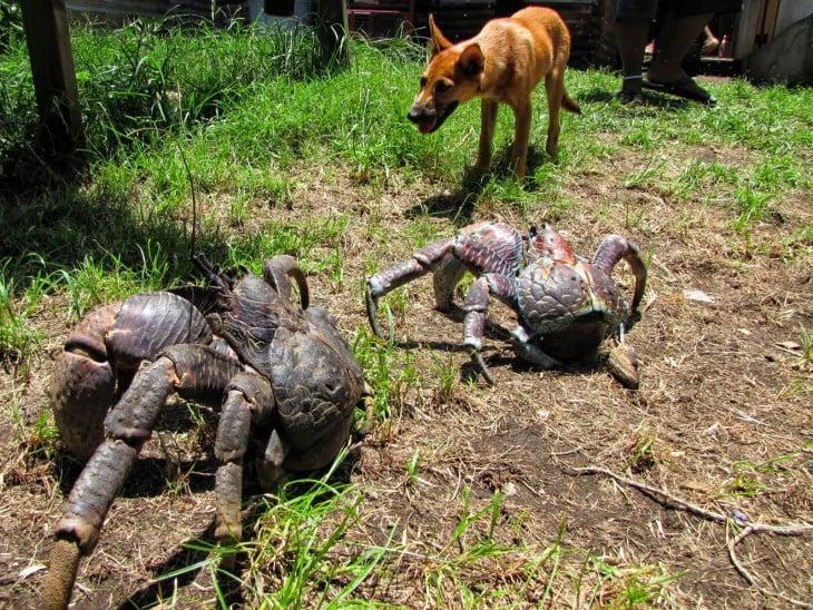perro que se encuentracon cangrejos centellas y parece que los quiere morder