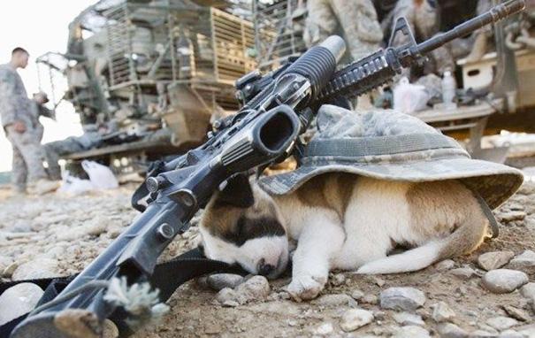 pero dormido debajo del casco de un soldado