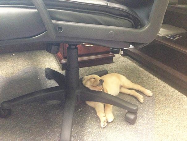 perro dormido bajo una silla