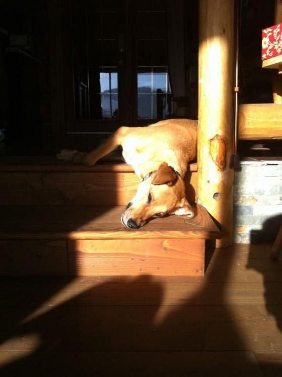 perro dormido mientras toma un poco de sol