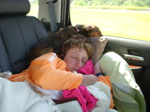 perrito dormido arriba de la cabeza de su dueñoa recargado en la ventana del coche