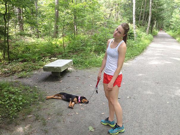 cachorro dormido durante el paseo por el parque