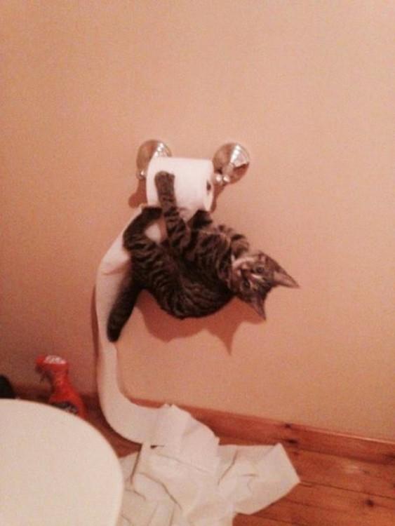 un gato colgado del papel sanitario