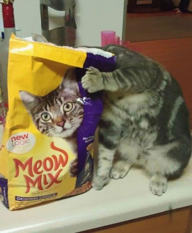 gato se acomoda en el momento preciso en el que su cabeza esta de la misma forma que sus croquetas