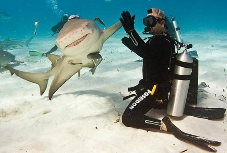 buzo chocandola con los tiburones