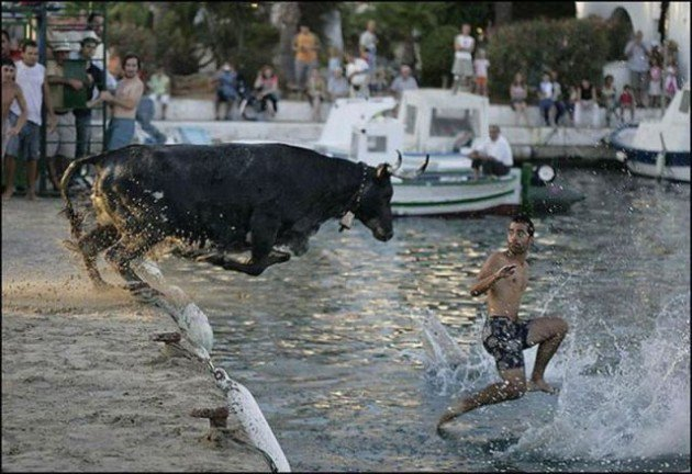 toro persigue a hombre hasta aventarlo al agua