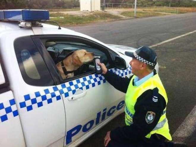 policia jugando con el perro al rtlelefono