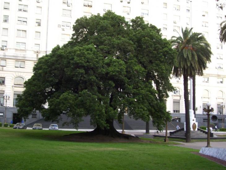 Ombu en el edificio Libertador en Buenos Aires