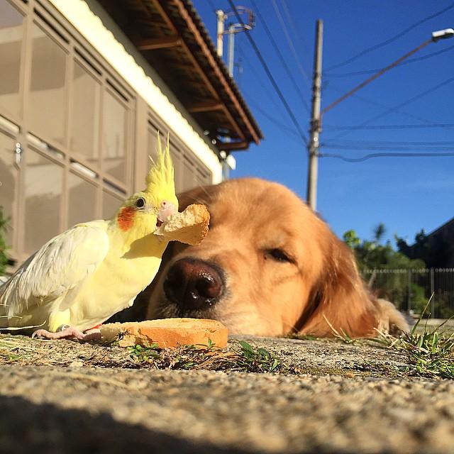 cabeza de un perro frente a un pájaro comiendo un pedazo de pan