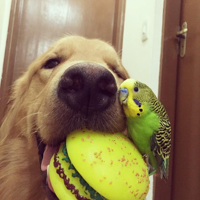 perro con un juguete en forma de hamburguesa y un pájaro en su hocico