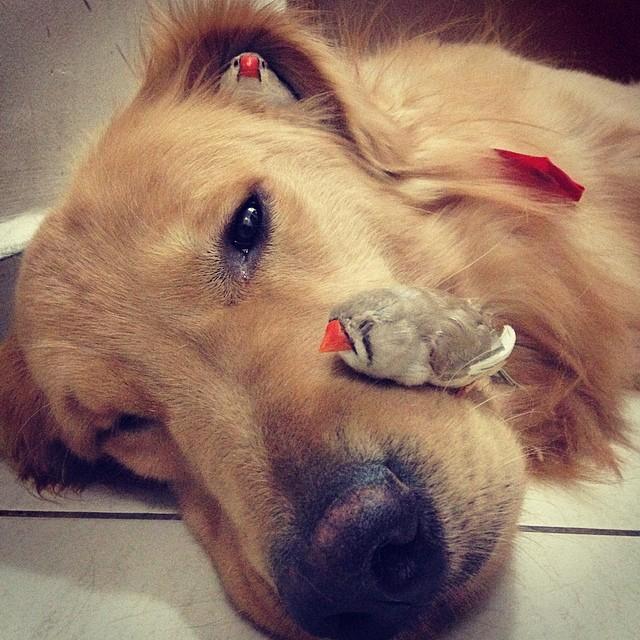 pájaros sobre la cabeza de un perro acostado en el suelo