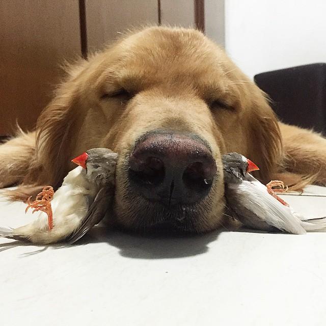 pájaros acostados a las orillas del hocico de un perro