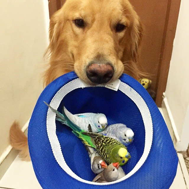 perro con un sombrero en su hocico con algunos pájaros dentro de él