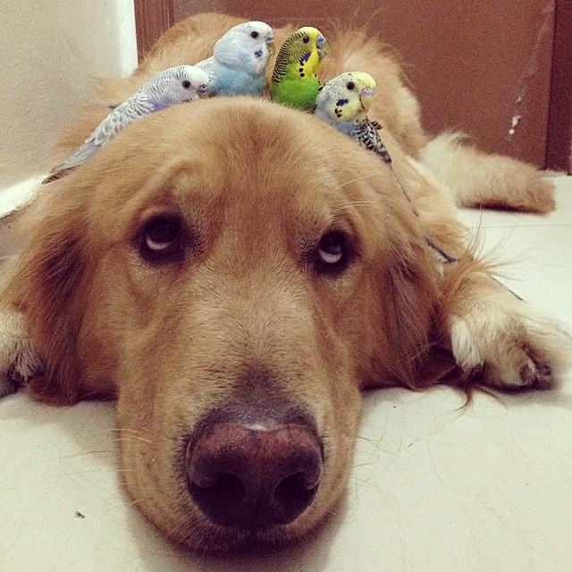pájaros sobre la cabeza de un perro tirado en el piso