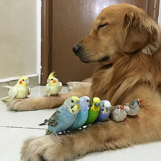perro con los ojos cerrados y con pájaros formados sobre sus patas