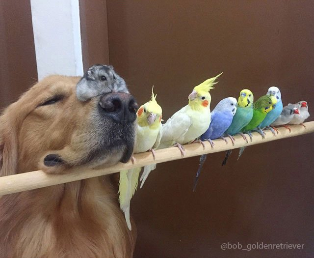 aves paradas sobre un palo junto a la cabeza de un perro con un hamster encima