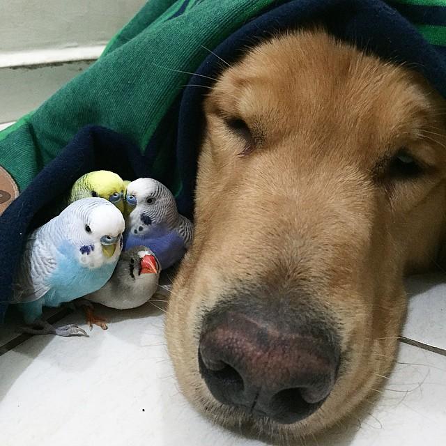 4 pájaros junto a un perro tapado de la cabeza