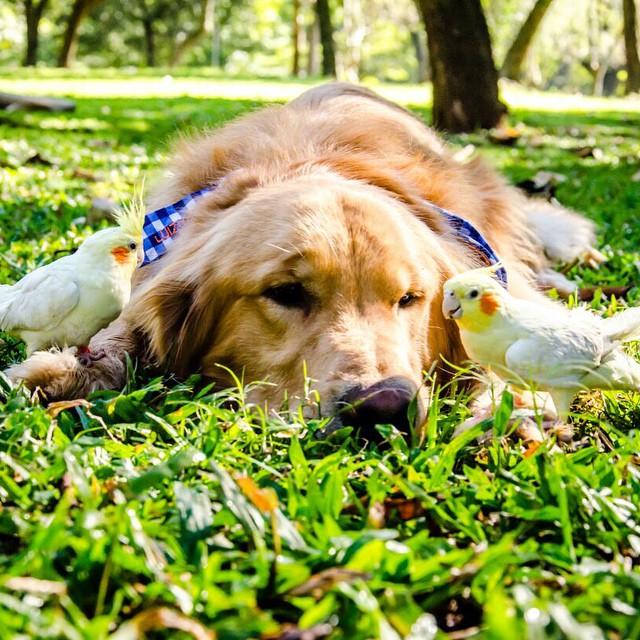 perro acostado sobre el césped