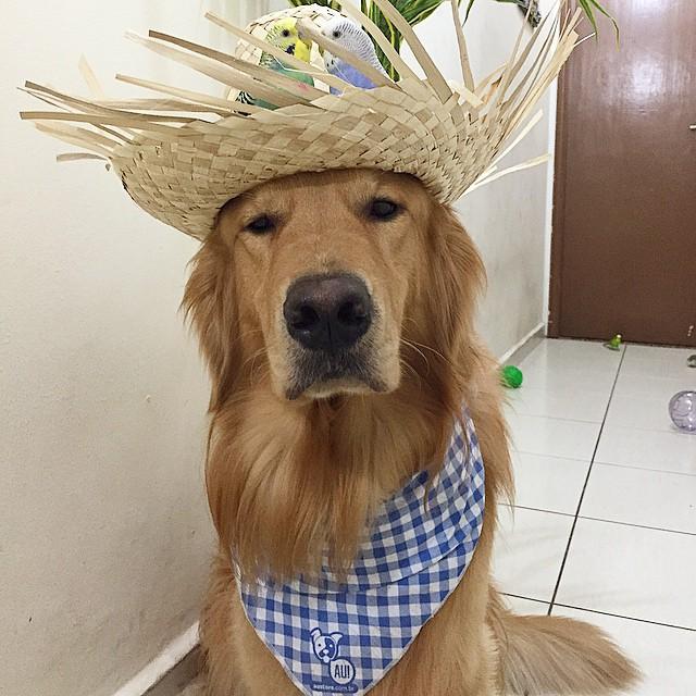 perro con un paliacate y un sombrero lleno de pájaros