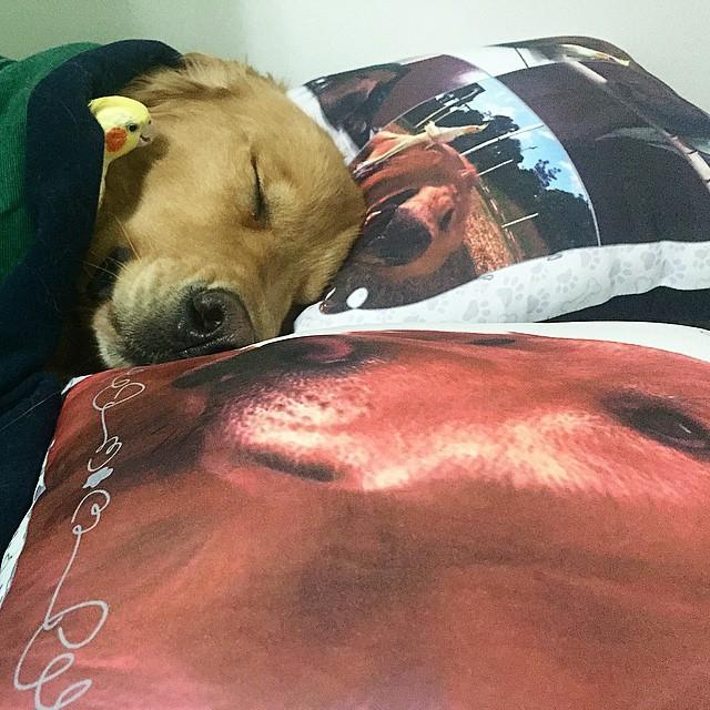 perro dormido sobre unas almohadas con un pájaro cerca