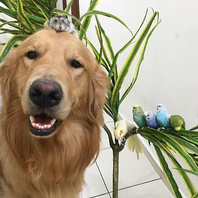 perro junto a muchas aves cerca de una planta