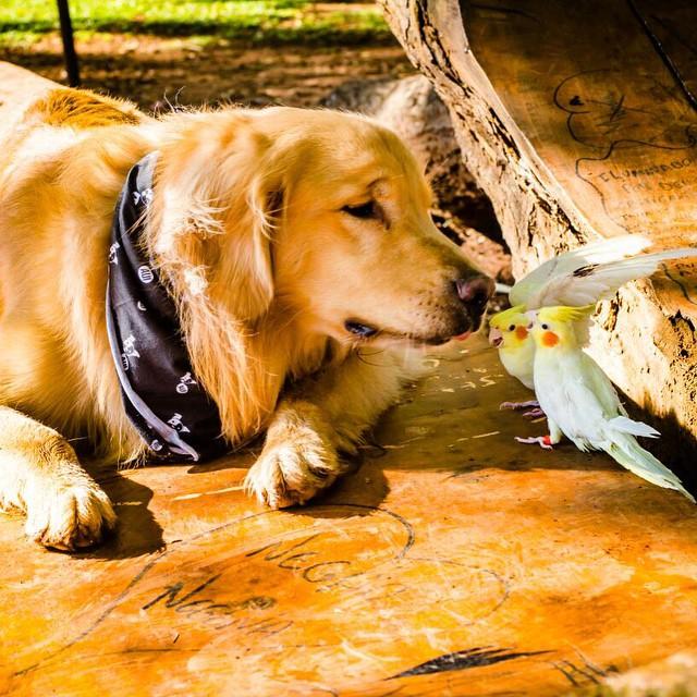 perro acostado en el piso viendo a dos pájaros frente de él