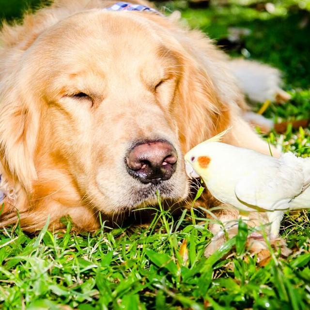 un pájaro recargándose en la cabeza de un perro en un jardín