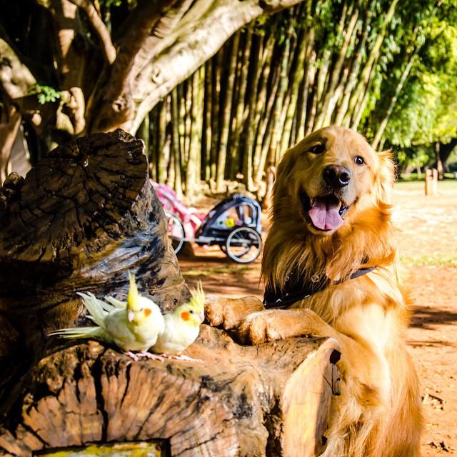 un perro parado sobre un trozo de madera donde están 2 pájaros