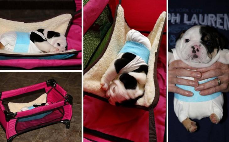 Diferentes fotografías de Bonsai la perrita con la mitad del cuerpo acostada en un corralito