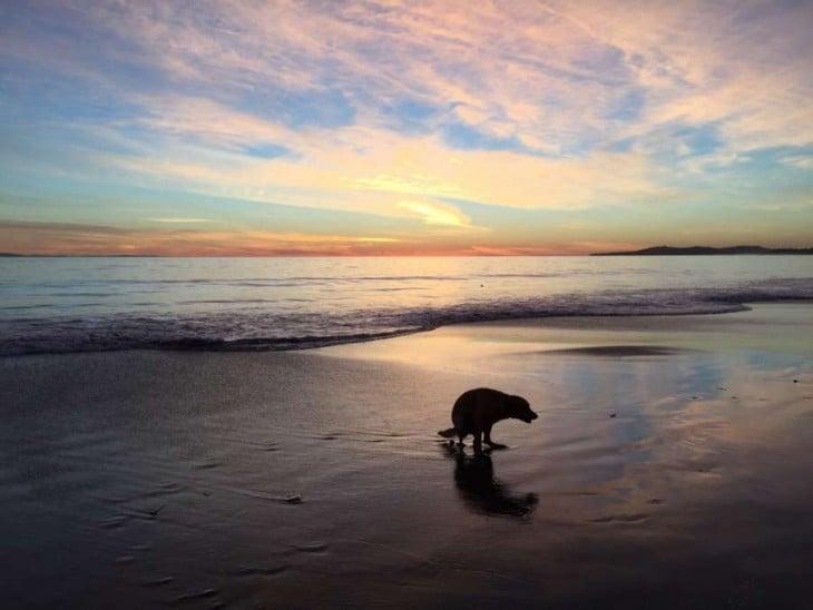 un perro defecando a la orilla de una playa al atardecer