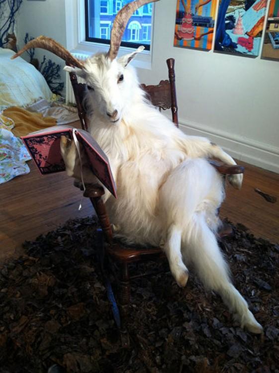 cabra sentada en una mecedora con un libro en sus manos