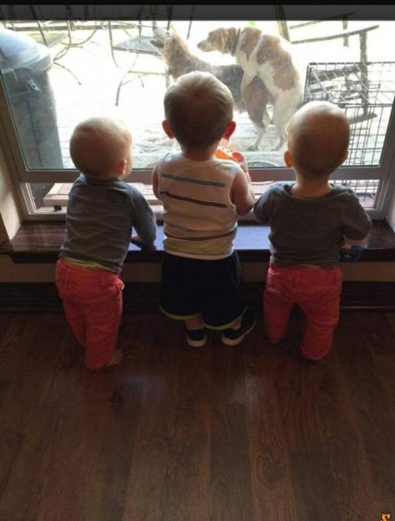 niños viendo por la ventana a dos perros
