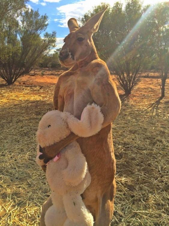 canguro con un oso de peluche en sus manos