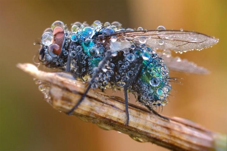 fotografía de una mosca llena de burbujas de agua