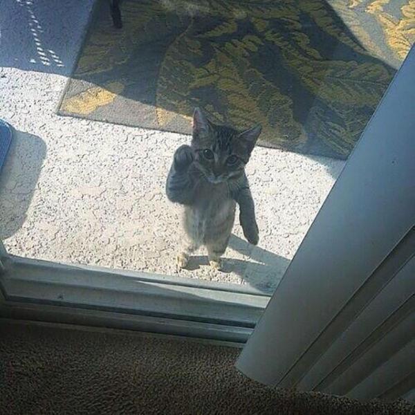 un gato detrás de una puerta que parece estar tocando