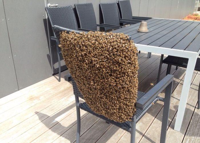 silla rodeada de muchas abejas
