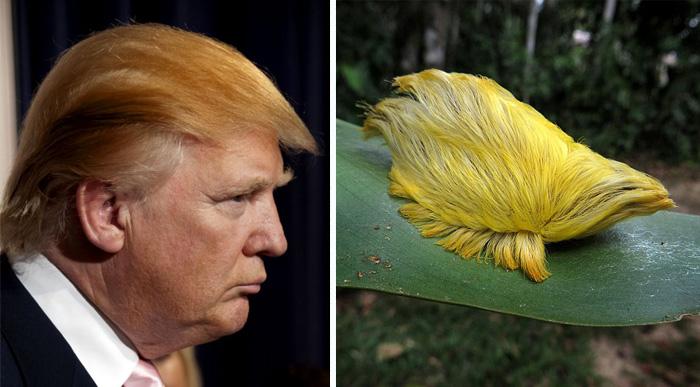 Donald Trump en una imagen con una oruga
