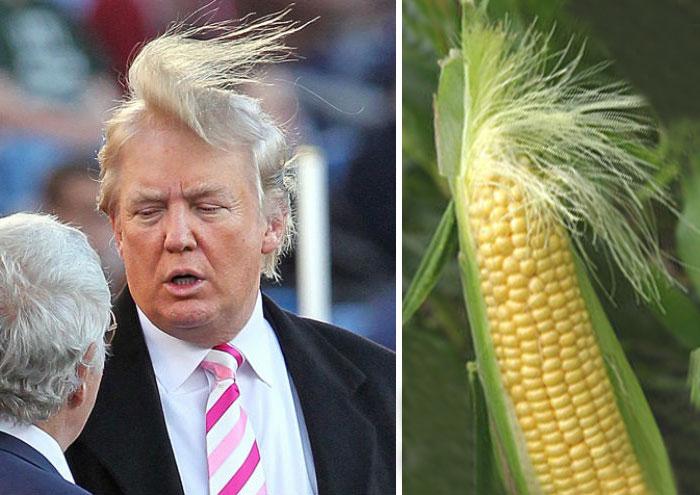Donal Trump en una imagen a lado de un elote