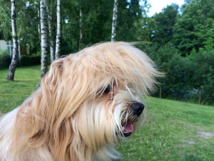Cabeza de un perro con un jardín de fondo